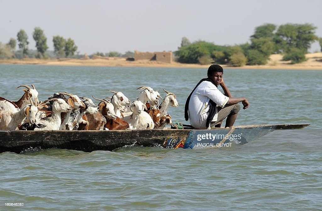 A goatherd in Timbuktu transports his herd of goats on February 4, 2012 in a pirogue on the river Niger.