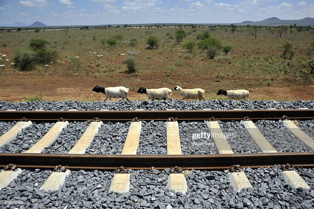 A goats herd walks alongside a newly laid section of rail track near the Simba passing station which will form part of the new MombasaNairobi...