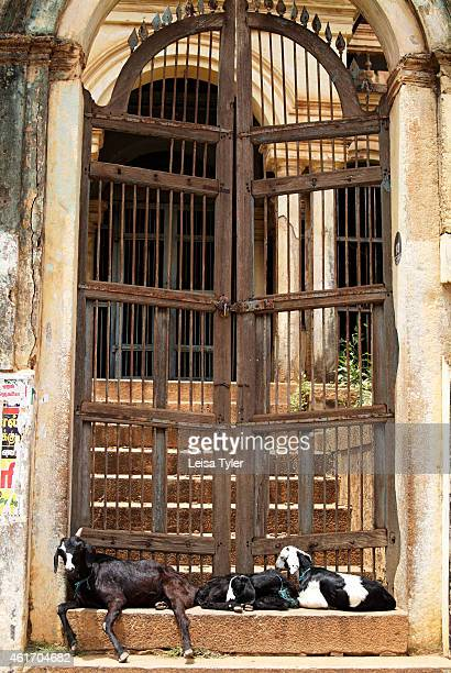 Goats sit outside the gates of an abandoned mansion in Karaikudi in the Chettinad region of Tamil Nadu Numbering more than 60 Chettinad's mansions...