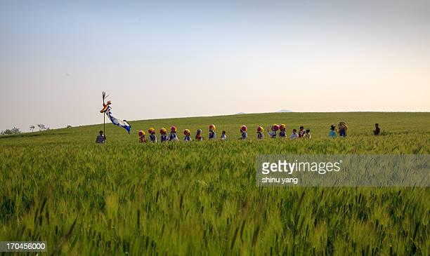 GoChang Barley Field Festival
