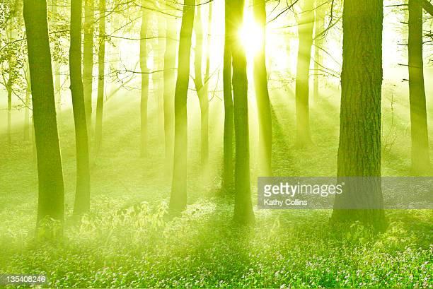 God rays illuminating spring woodland
