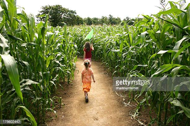 Going through the maize