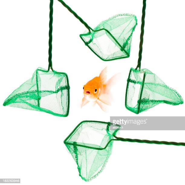 Gold fish in danger surrounded by four fish nets