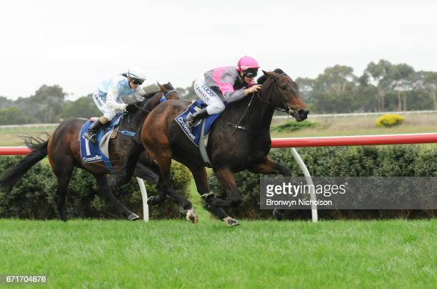 Gold Medals ridden by Linda Meech wins the Sungold Milk Terang Cup at Terang Racecourse on April 23 2017 in Terang Australia