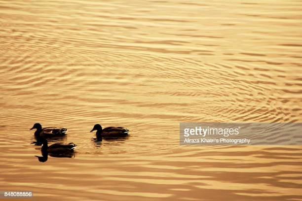 Gold Ripples - Silhouette abstract Background