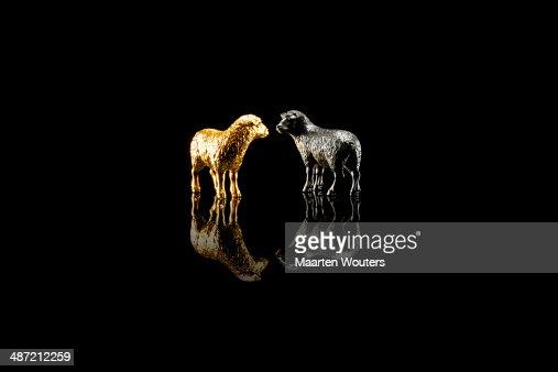 gold saying sheep : Foto de stock