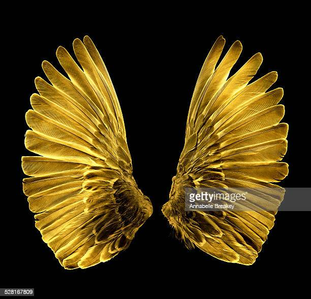 Gold Wings