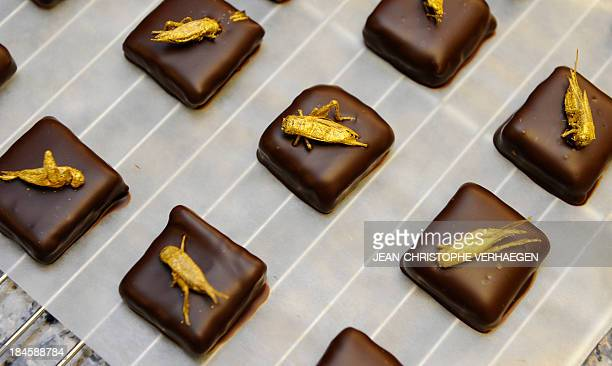 Goldcoated crickets sit on chocolates on October 12 2013 in French chocolate maker Sylvain Musquar's store in VillerslesNancy northeastern France...