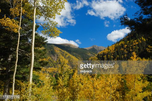 Golden Aspen in the Mountains