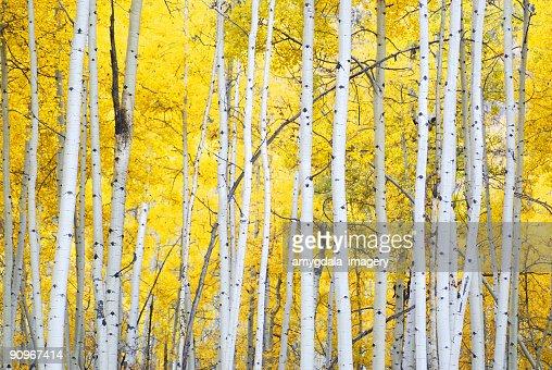 ゴールドの秋絢爛