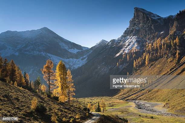 golden autumn in tirol
