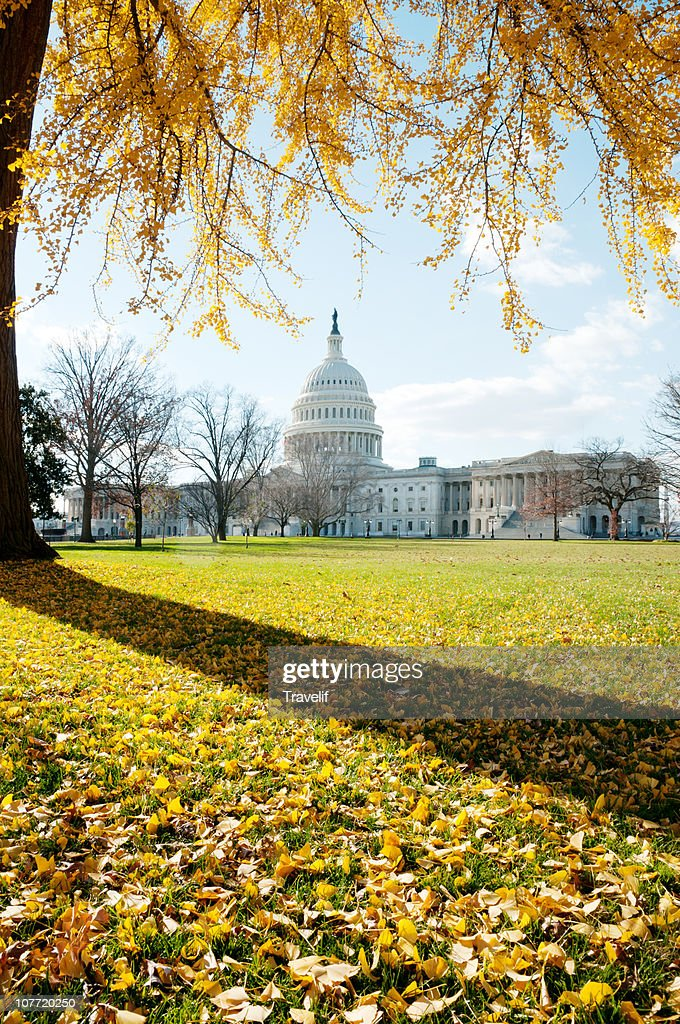 Golden autumn on Capitol Hill : Stock Photo