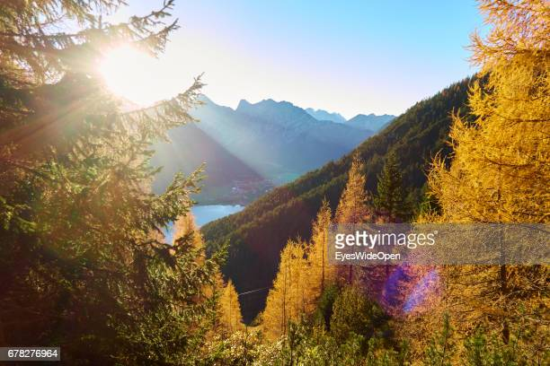 Golden Coloured Pine Trees at Indian Summer in the Mountains of Rofan on October 31 2015 in Achensee Tyrol Austria