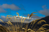 golden crop with snow covered mountain background