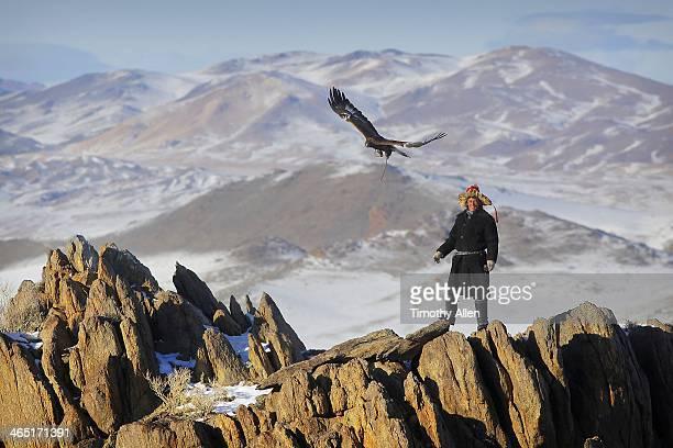 Golden eagle hunter flies bird in Altai mountains