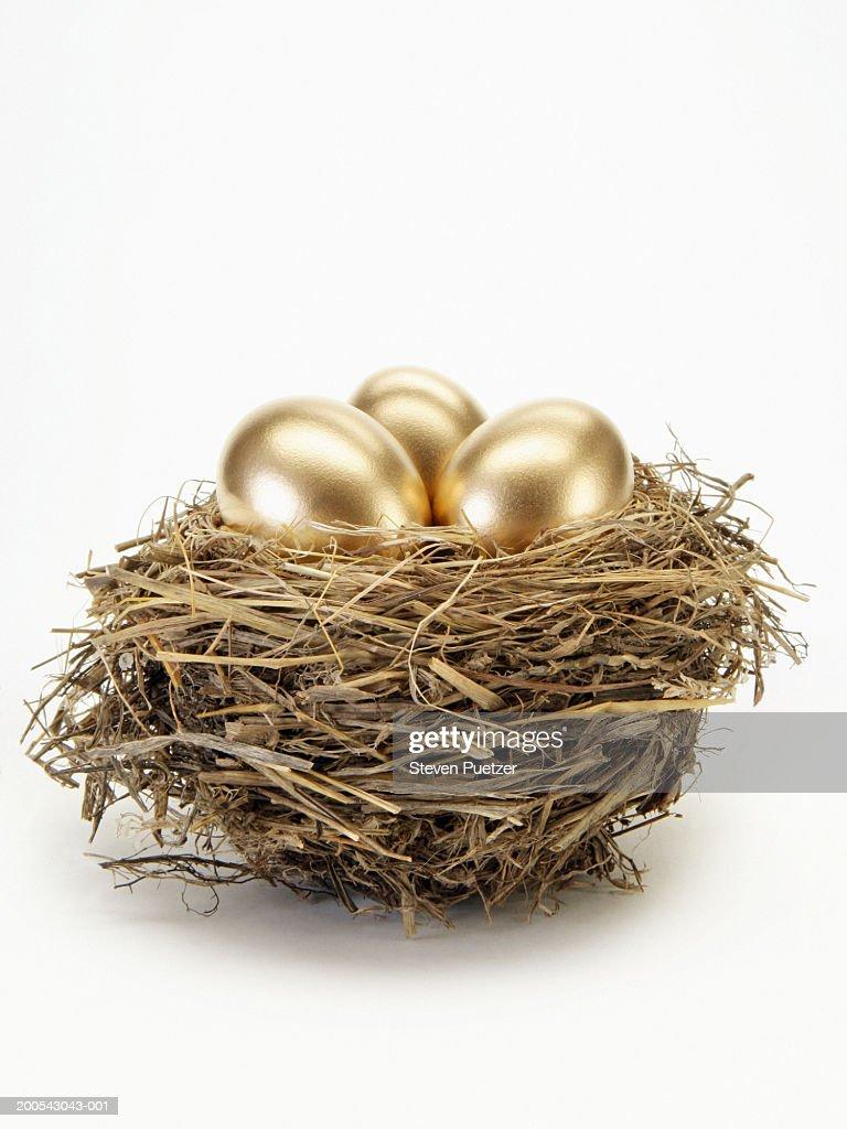 Golden eggs in bird's nest : Stock Photo