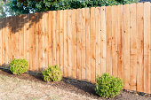 Evening sun shining on a new fence.