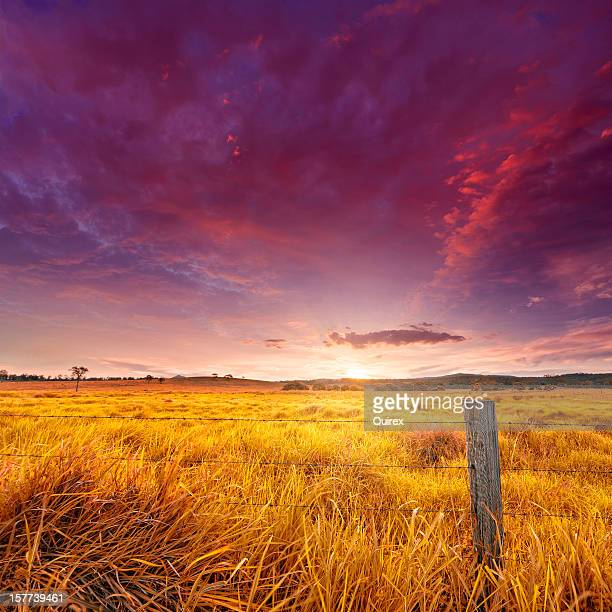 Golden field illuminated by the sunset