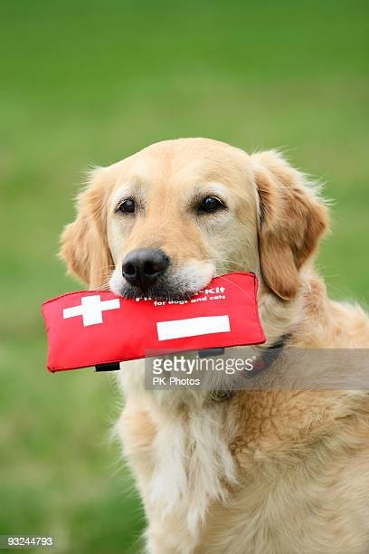 Golden furred dog with a red first aid kit in its mouth