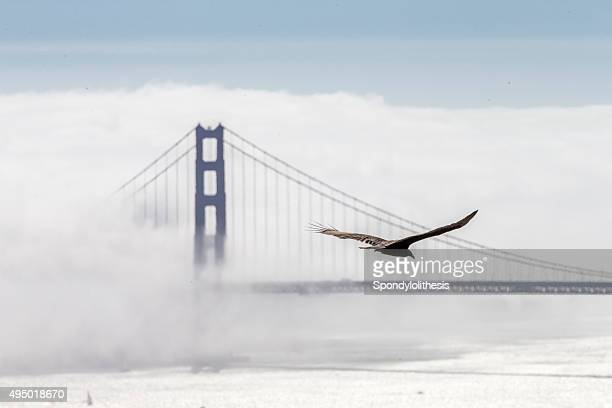 Golden Gate Bridge with low fog, San Francisco