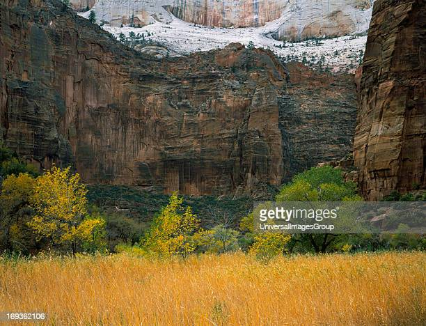 Golden grasses fill the valley floor of Zion Canyon in autumn The trail to Angel's Point runs along the division between the dark and light colored...