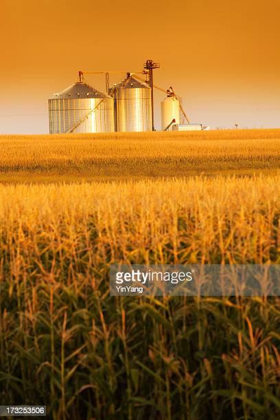 Golden Harvest Sunrise Over Corn Field and Grain Bin Silo