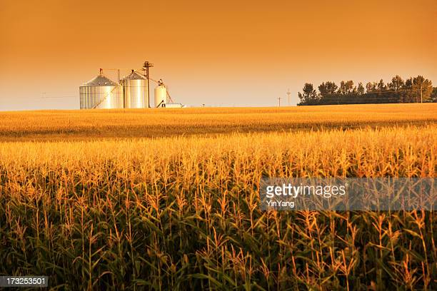 Golden Harvest Sunrise with Corn Field and Grain Bin Silo