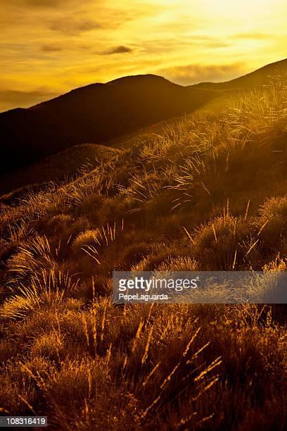 Golden paisaje en España