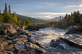 Wild river streaming between big rocks in pine forest landscape