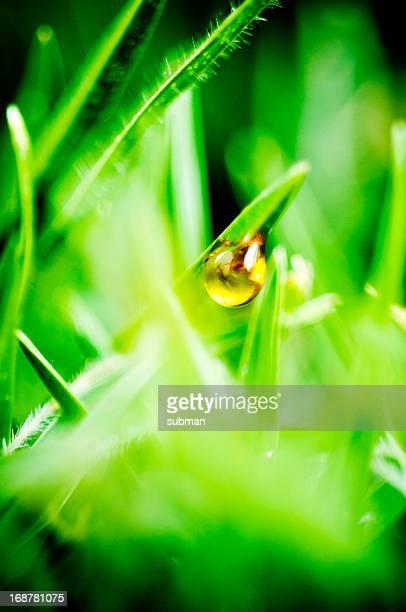 Golden liquid drop in green grass