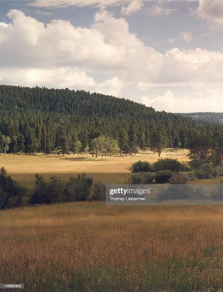Golden meadow in Colorado rockies : Stock Photo