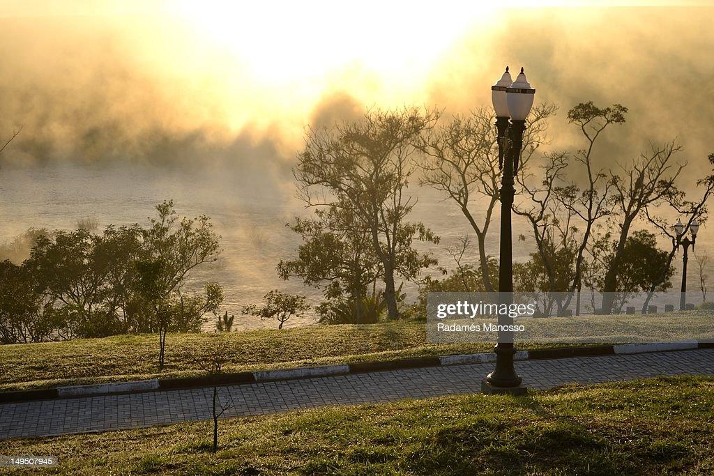 Golden morning : Foto de stock