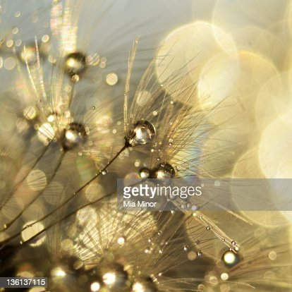 Golden nature : Stock Photo