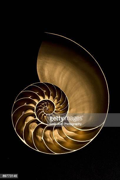 Golden nautilus shell on black sand