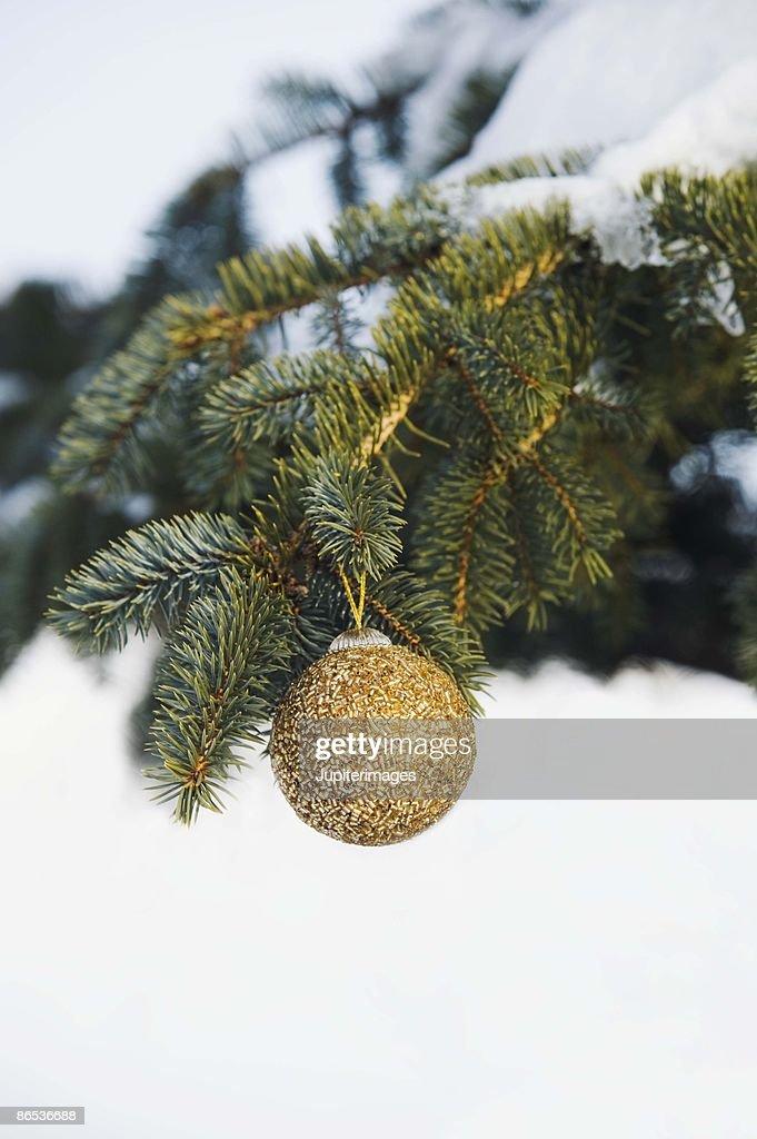 Golden ornament on pine bough : Stock Photo