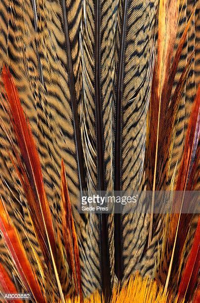 Golden Pheasant Feather Detail