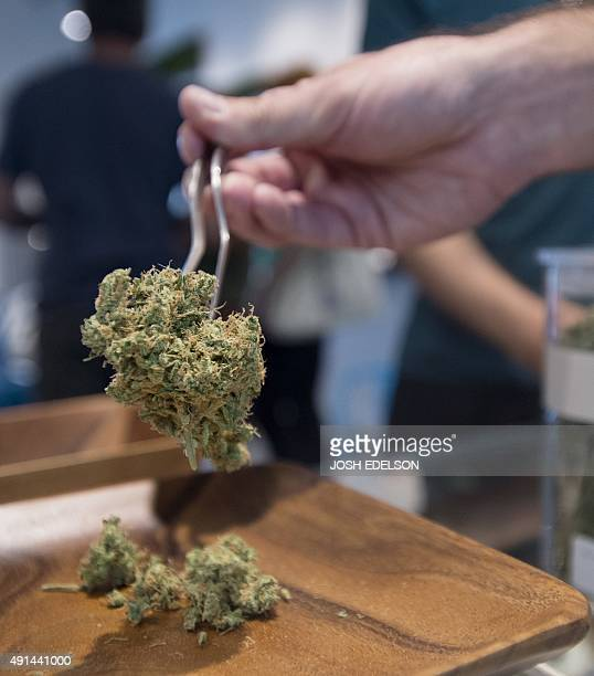 'Golden Pineapple' is placed on a scale for a customer at Farma a marijuana dispensary in Portland Oregon on October 4 2015 As of October 1 2015 a...