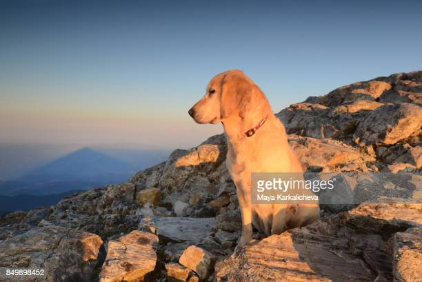 Golden retriever dog and a shadow of a mountain summit