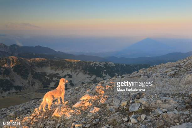 Golden retriever dog overlooking majestic mountain view and a summit shadow