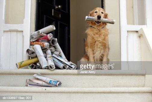 ゴールドの収集用具ドッグシッターサービスの正面玄関を持つ新聞