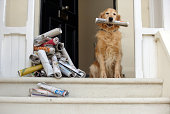Golden retriever dog sitting at front door holding newspaper