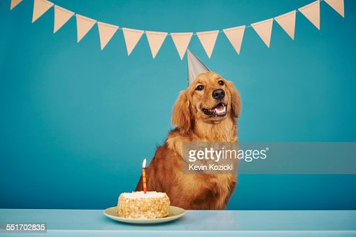 Golden retriever wearing party hat, cake with one candle in front of him