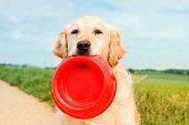Golden Retriever with dog bowl