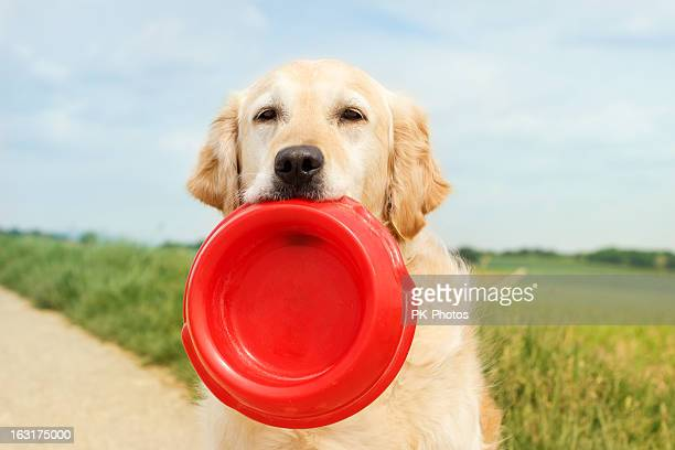 Golden Retriever with dog bowl