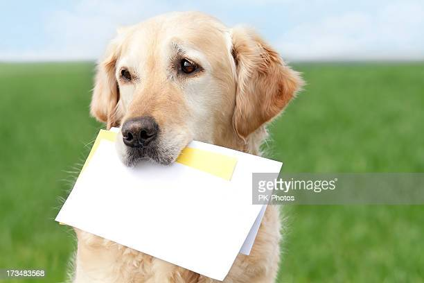 Golden Retriever with letters
