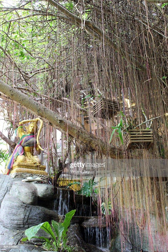 Golden statue and weeping willow Wat Saket temple Bangkok Thailand : Photo