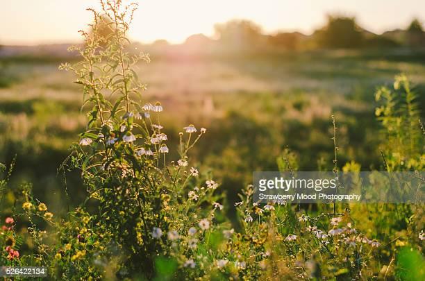 singles in golden meadow Your community newspaper - larose, la serving raceland, gheens, lockport, valentine, larose, cut off, galliano, golden meadow, leeville, & grand isle.