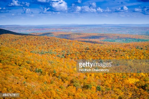 Golden view : Stock Photo