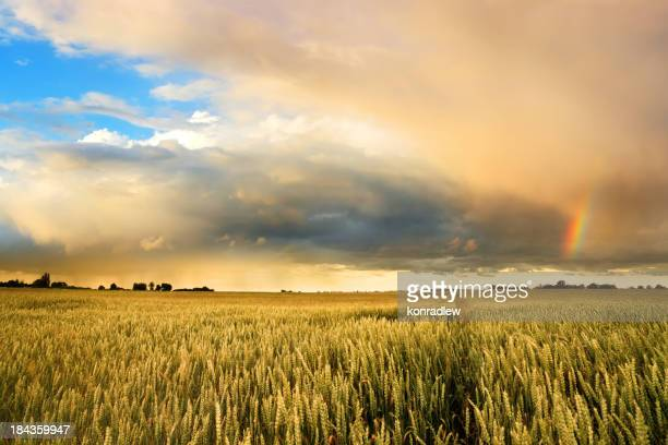 Golden Wheat Field und Regenbogen-Sonnenuntergang Landschaft