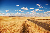Golden wheat field, road through, blue sky, summer time. sunny day, clouds